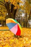 Красочный зонтик лежа на желтых листьях Стоковое Изображение