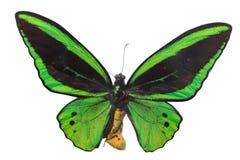 Красочный изолят бабочки на белизне Стоковое Изображение