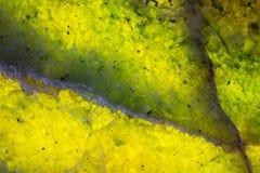 Красочный и загоренный зеленый утес жадеита Стоковые Изображения RF