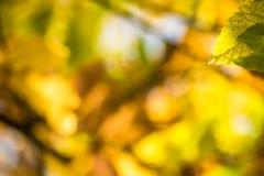 Красочный каштан сезона падения осени выходит, творческая картина предпосылки Стоковые Фотографии RF