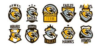 Красочный комплект логотипов, стикеров, эмблем хоука и орла Потрясающий хоук, охотник, хищник, опасная бесплатная иллюстрация