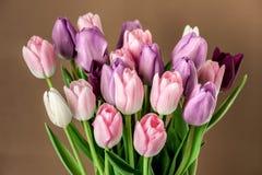 Красочный конец-вверх тюльпанов Стоковое Фото