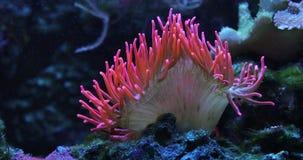 Красочный коралловый риф сток-видео