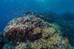 Красочный коралловый риф 1 Стоковое Изображение RF
