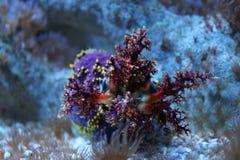 Красочный коралл Стоковое Изображение RF