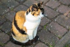 Красочный кот 3 сидя на камнях Стоковая Фотография RF