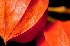 Красочный крупный план мини-тыкв Стоковое фото RF