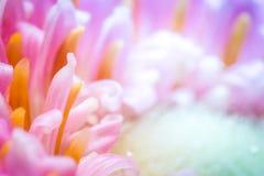 Красочный крупный план цветка. Стоковое Изображение RF