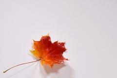 Красочный кленовый лист осени стоковая фотография
