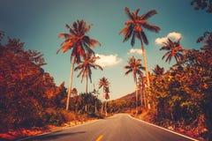 Красочный ландшафт захода солнца с пальмой в джунглях стоковые фото