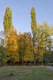 Красочный ландшафт осени осеннего леса с дорогой, glade и стендом в южном парке стоковое изображение