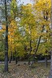 Красочный ландшафт осени осеннего леса с дорогой, glade и стендом в южном парке стоковые изображения rf