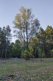 Красочный ландшафт осени осеннего леса с дорогой, glade и стендом в южном парке стоковое изображение rf