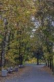 Красочный ландшафт осени осеннего леса с glade и дороги в южном парке стоковые фото