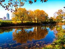 Красочный ландшафт отражений дерева осени стоковое изображение