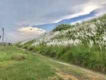 Красочный ландшафт Стоковая Фотография RF
