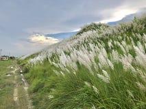 Красочный ландшафт Стоковые Фото