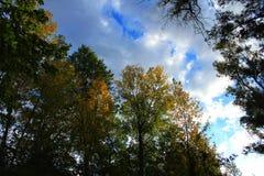 Красочный лес и голубое небо Стоковые Фото