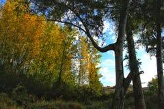 Красочный лес и голубое небо Стоковая Фотография