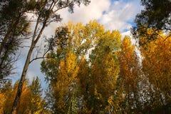 Красочный лес и голубое небо Стоковые Фотографии RF