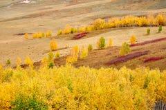 Красочный лес осени на степи Стоковая Фотография