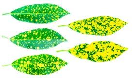 Красочный лист дерева на белой предпосылке стоковые фотографии rf