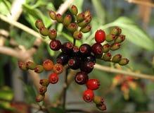 Красочный макрос группы в составе ягоды стоковое фото rf