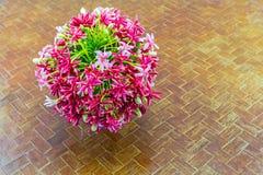 Красочный матрос Drunen цветка, creeper Рангуна, Indic Quisqualis Стоковое Изображение