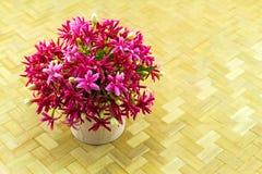 Красочный матрос Drunen цветка, creeper Рангуна, Indic Quisqualis Стоковая Фотография RF