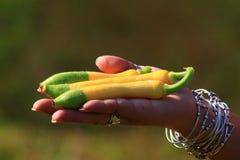 Красочный огурец Стоковая Фотография