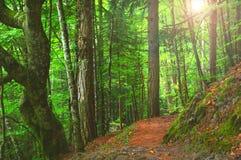 Красочный осенний лес в мифических Mount Olympus - Греции стоковые фотографии rf