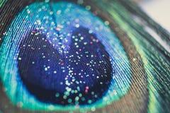 Красочный павлин пера с bokeh светов флаг принципиальной схемы над белизной текста мира вашей Стоковое Изображение RF