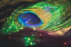 Красочный павлин пера с bokeh светов флаг принципиальной схемы над белизной текста мира вашей Стоковая Фотография RF