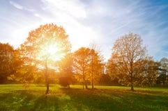 Красочный парк осени захода солнца Природа осени ландшафт-пожелтела парк осени в погоде осени солнечной Стоковое Изображение