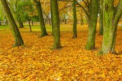 Красочный парк падения в малом городе в Польше Стоковые Фото