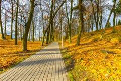 Красочный парк падения в малом городе в Польше Стоковое Изображение