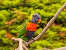 Красочный попугай на ветви Стоковое Изображение