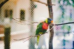 Красочный попугай Стоковое Фото