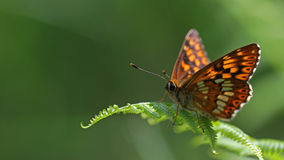 Красочный портрет бабочки Стоковые Фото