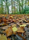 Красочный пол леса Стоковое фото RF