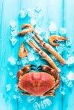 Красочный продукт моря на деревянном голубом backgound Стоковое Изображение RF