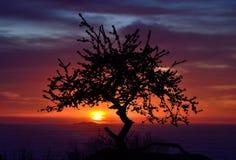 Красочный рассвет с деревом подсвеченным Стоковые Изображения