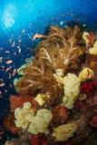 Красочный риф, ampat раджи, Индонезия Стоковое Изображение
