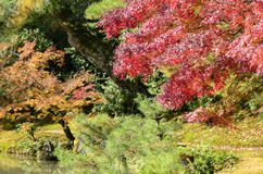 Красочный сад осени Стоковая Фотография RF