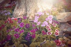Красочный свет солнца цветков Стоковые Изображения RF