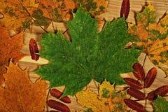 Красочный сезон листвы осенью Стоковое Изображение RF