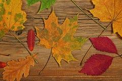 Красочный сезон листвы осенью Стоковое Изображение