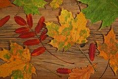 Красочный сезон листвы осенью Стоковое фото RF