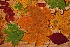 Красочный сезон листвы осенью Стоковые Фотографии RF