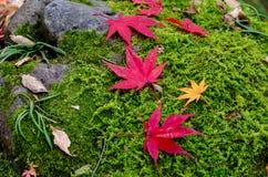 Красочный сезон лист осени стоковая фотография rf